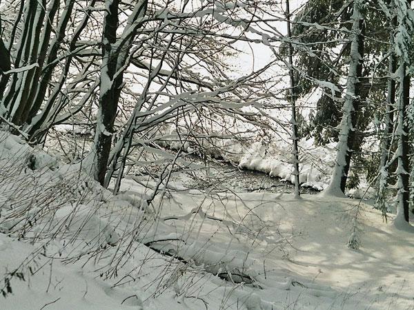 winterswf1_2005