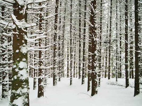 winterswf5_2005