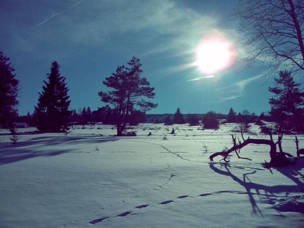 winter22_2009